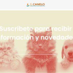 Crematorio de mascotas en Santiago